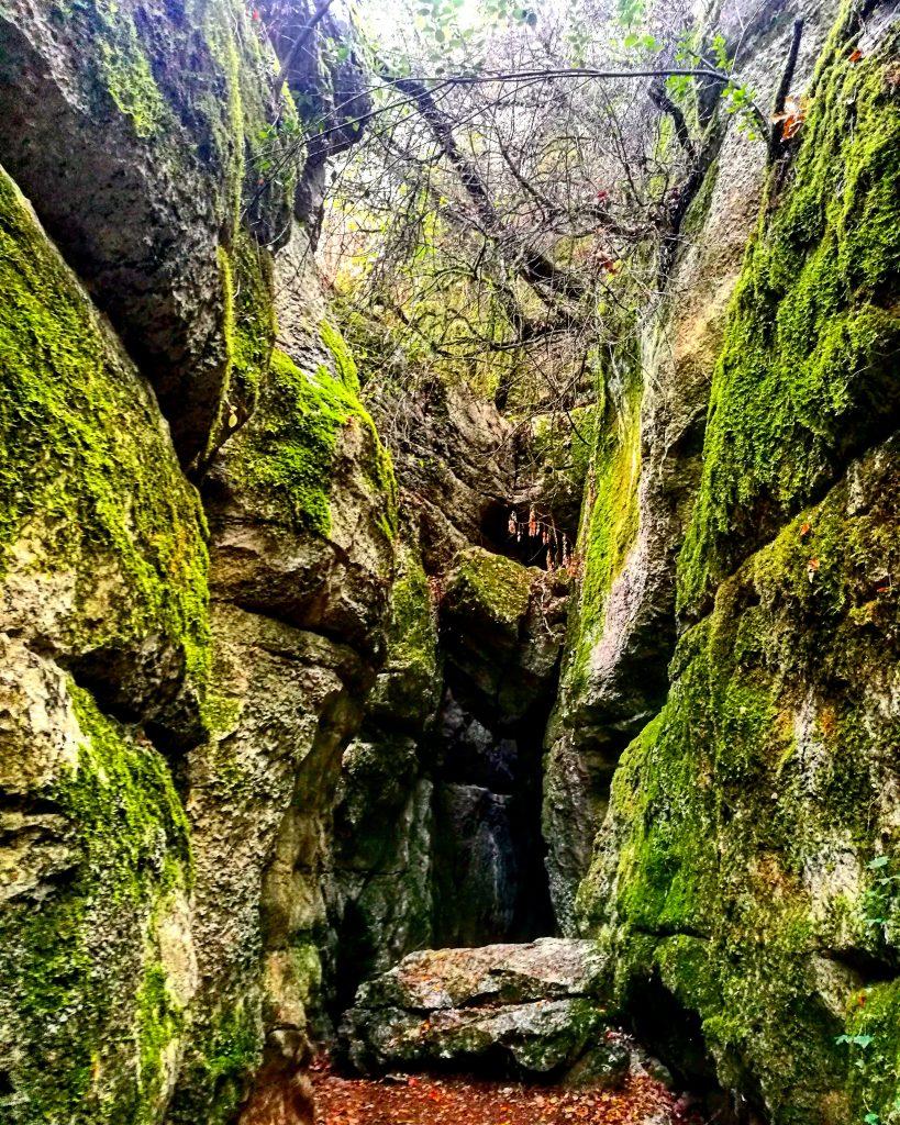 Randonnée dans le bois de païolive